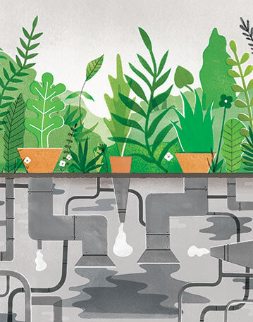 Illustration of three potted plants with pipes beneath them